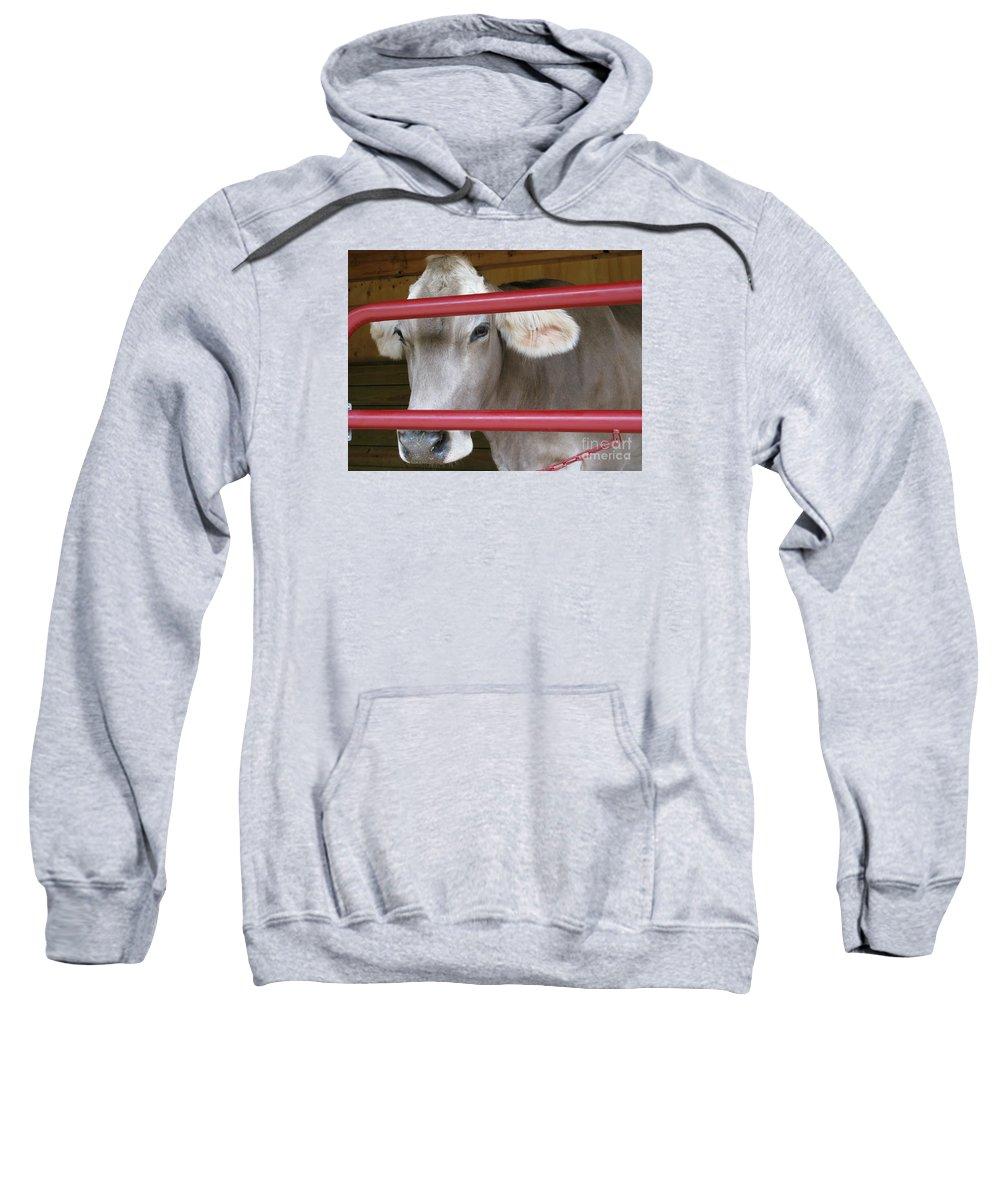 Calf Sweatshirt featuring the photograph Jersey Calf by Ann Horn