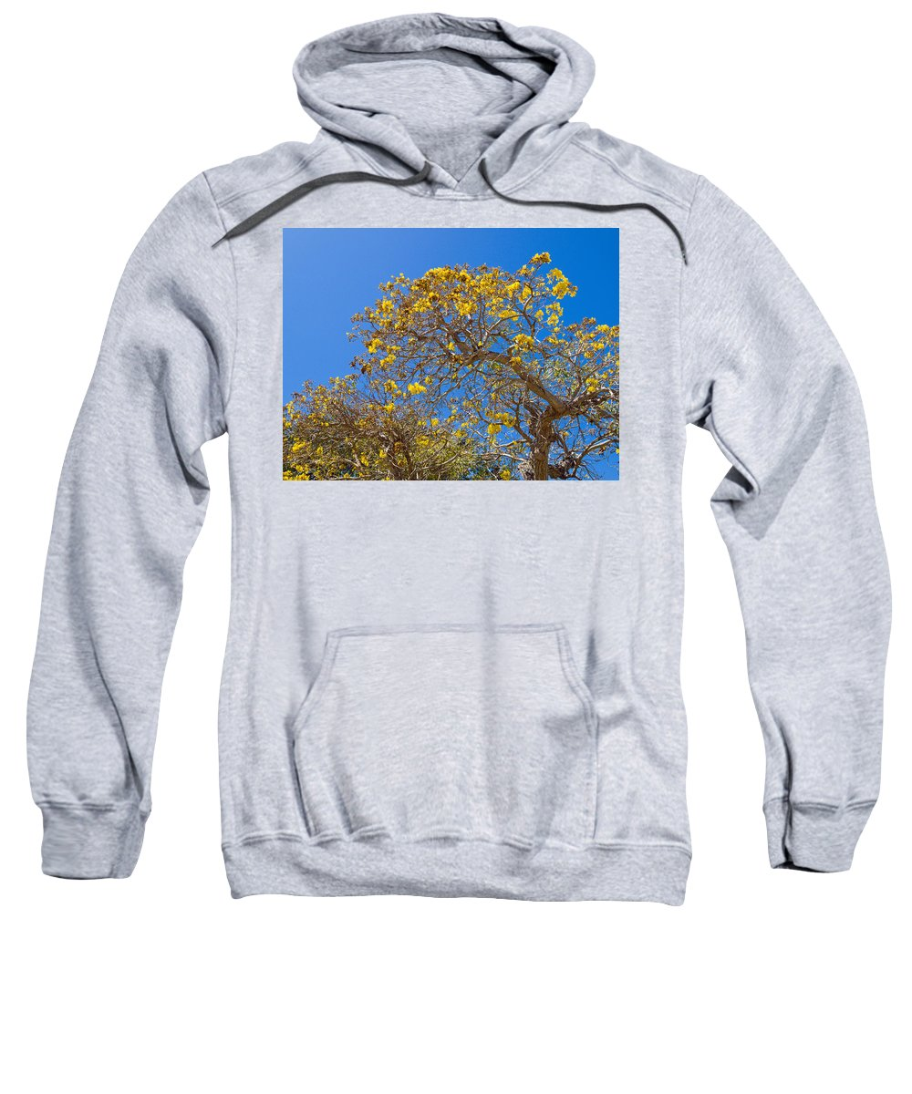 Florida; Tree; Plant; Flower; Flowering; Blossom; Blossoming; Jerusalem; Thorn; Possom; Mexican; Pal Sweatshirt featuring the photograph Jerusalem Thorn Tree by Allan Hughes