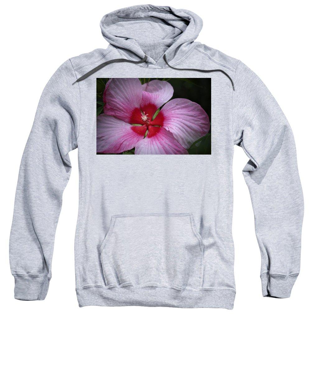 Hibiscus Sweatshirt featuring the photograph Junes Hibiscus 2 by Teresa Mucha