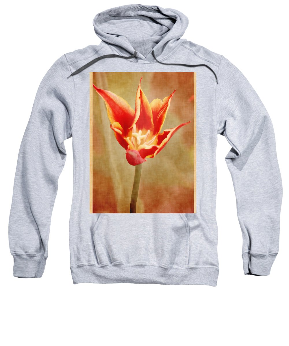 Floral Sweatshirt featuring the photograph Just Because by Debbie Nobile