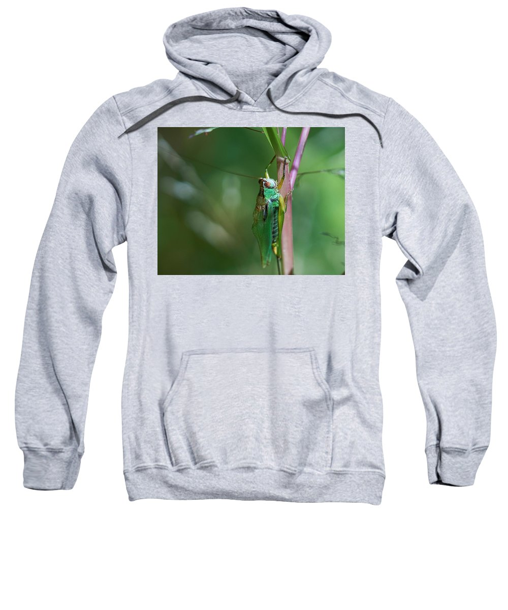 Grasshopper Sweatshirt featuring the photograph Just Hanging Out by Brian Bartz
