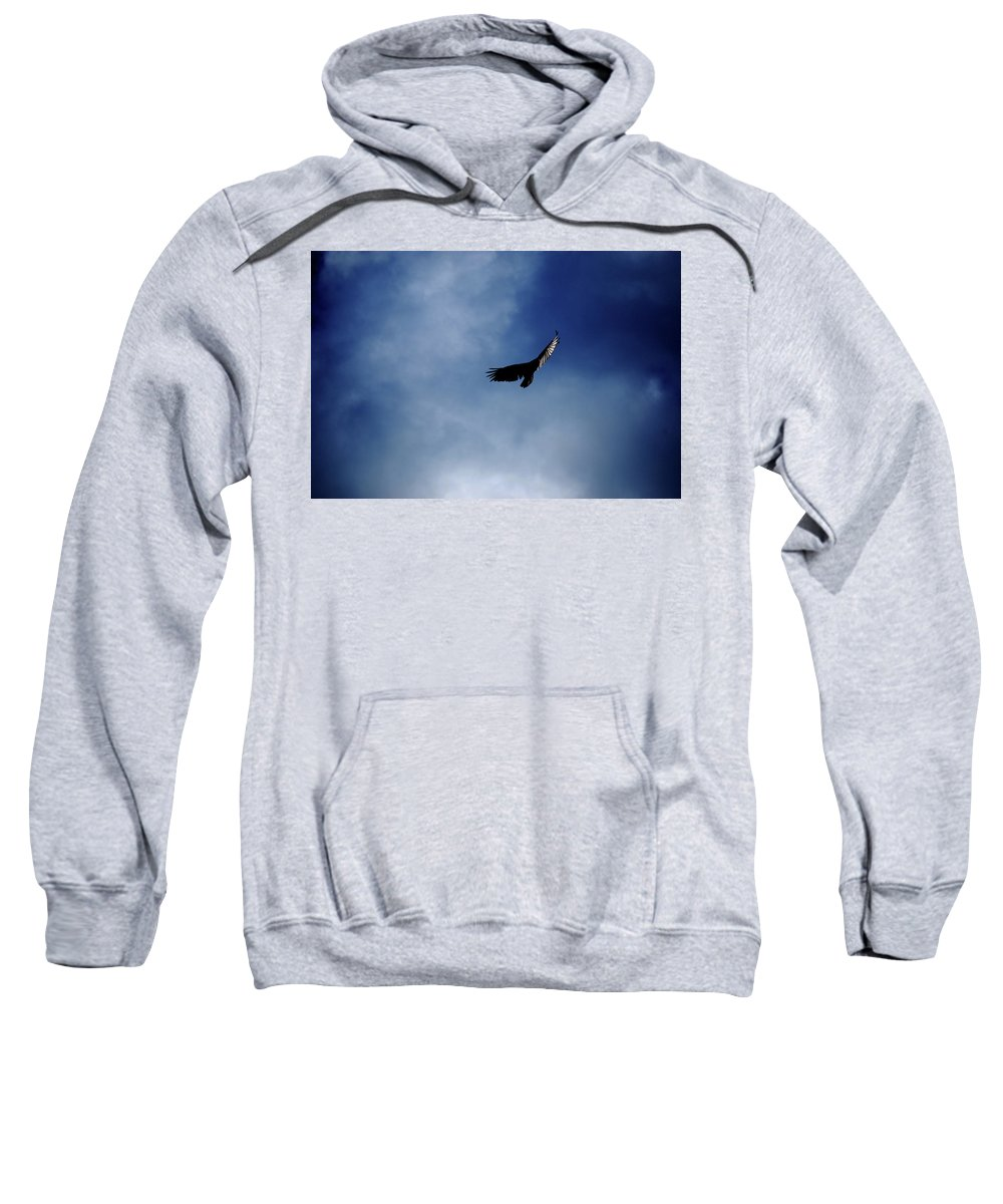 Bird Sweatshirt featuring the photograph Just Me And The Clouds by Lori Tambakis