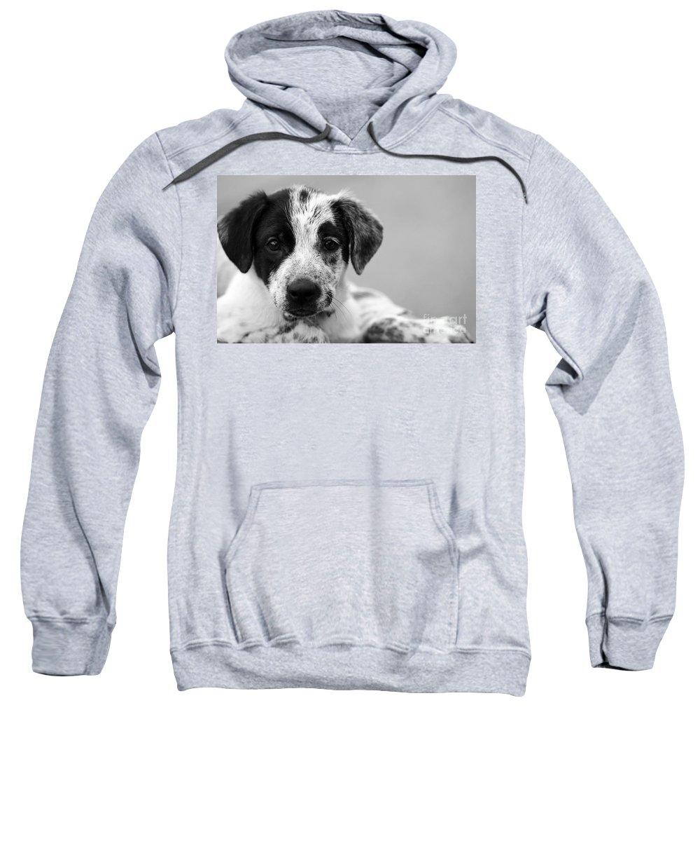 Dog Sweatshirt featuring the photograph Keep Me by Amanda Barcon