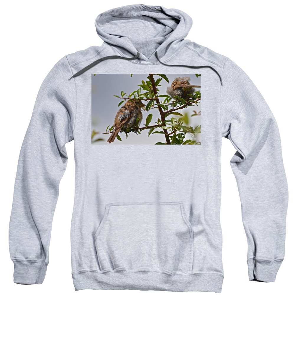 Feathers Sweatshirt featuring the photograph Keeping Warm by Photos By Zulma