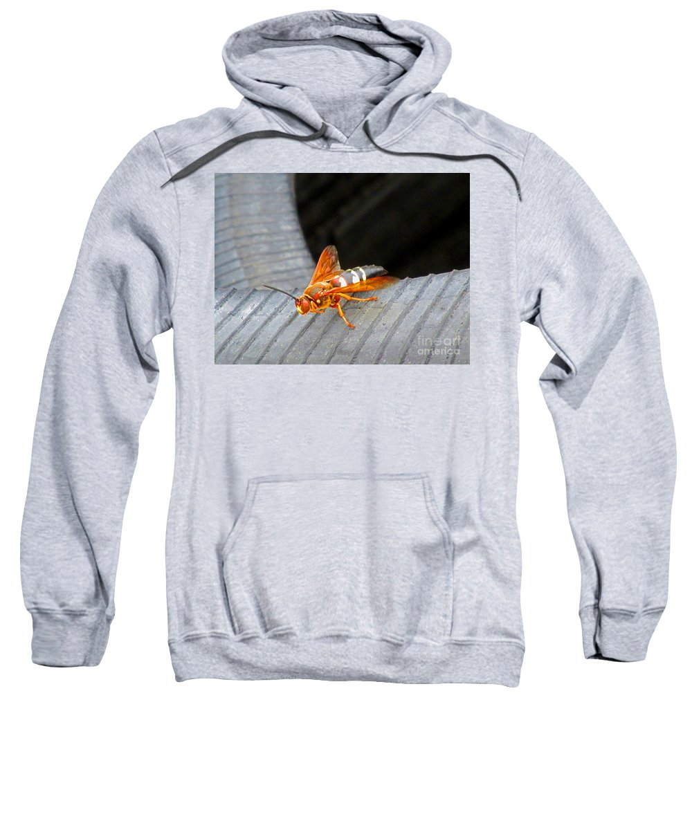 Cicada Killer Wasp Sweatshirt featuring the photograph Killer 2 by Don Baker