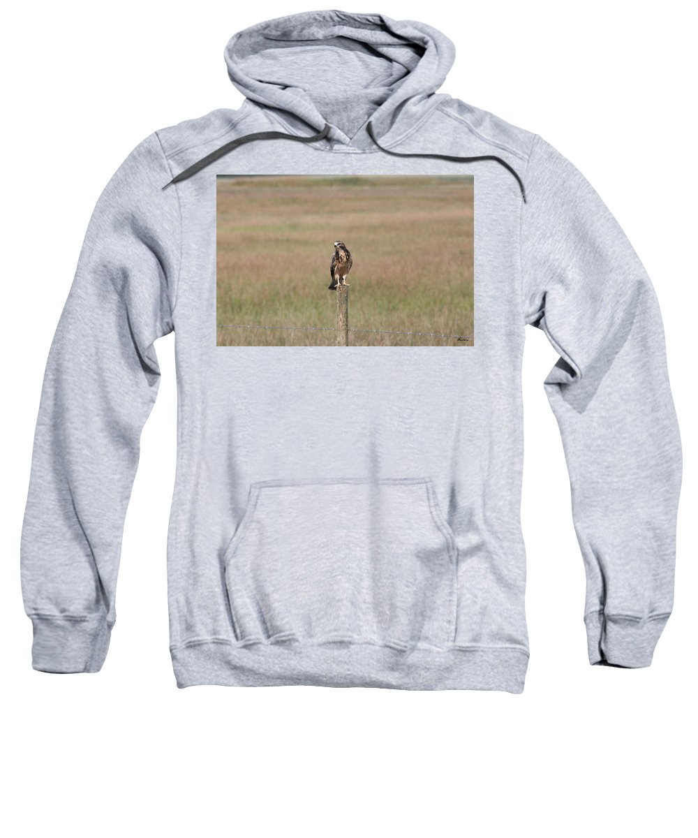Hawk Wild Bird Nature Grass Fence Barbwire Flying Sweatshirt featuring the photograph King Of His Domain. by Andrea Lawrence