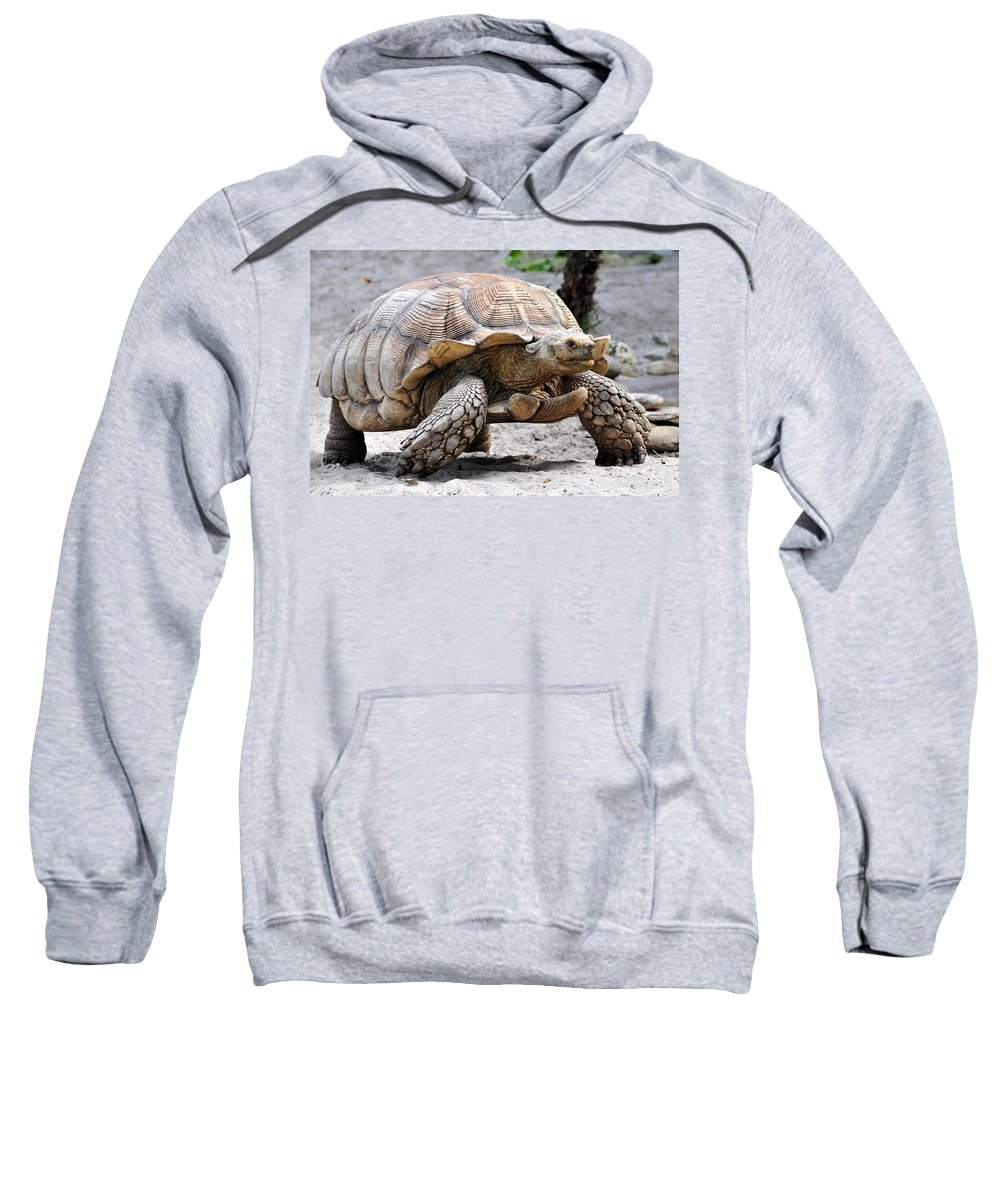 Galapagos Turtle Sweatshirt featuring the photograph King Of The Galapagos by David Lee Thompson
