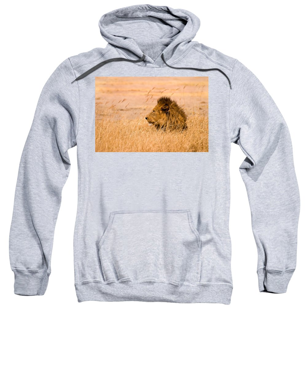 3scape Sweatshirt featuring the photograph King Of The Pride by Adam Romanowicz