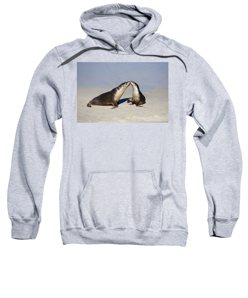 Sea Lion Sweatshirt featuring the photograph Kiss by Mike Dawson