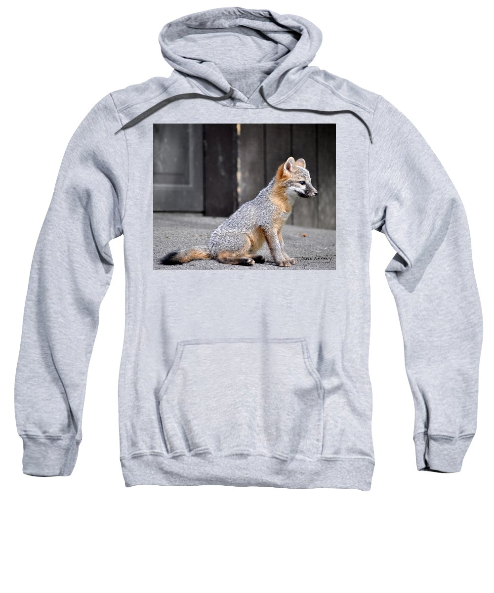 Kit Fox Sweatshirt featuring the photograph Kit Fox2 by Torie Tiffany