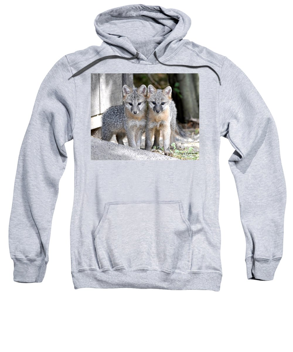 Kit Fox Sweatshirt featuring the photograph Kit Fox6 by Torie Tiffany