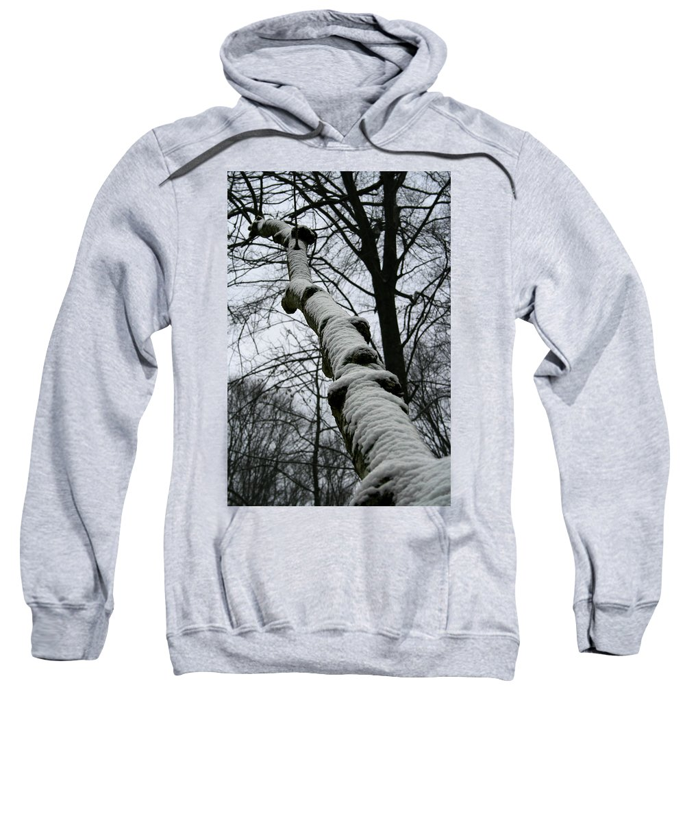 Nature Winter Snow White Cold Quite Peaceful Forest Woods Tree Cover Grey Knot Outdoor Sweatshirt featuring the photograph Knoted by Andrei Shliakhau