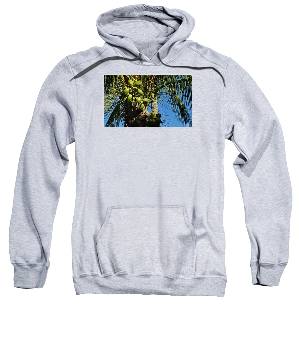 Palm Tree Sweatshirt featuring the photograph Laden Palm Tree by Maria Keady