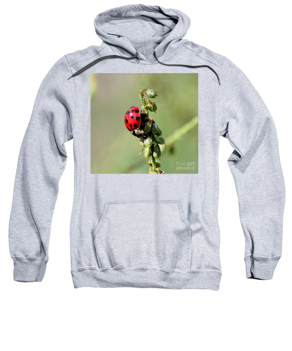 Landscape Sweatshirt featuring the photograph Lady Beetle by David Lane