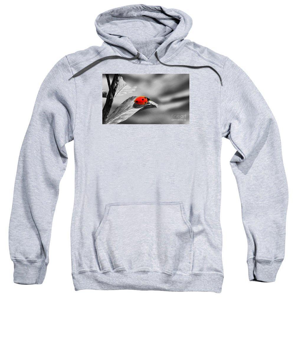 Ladybird Sweatshirt featuring the photograph Ladybird by Sebastien Coell