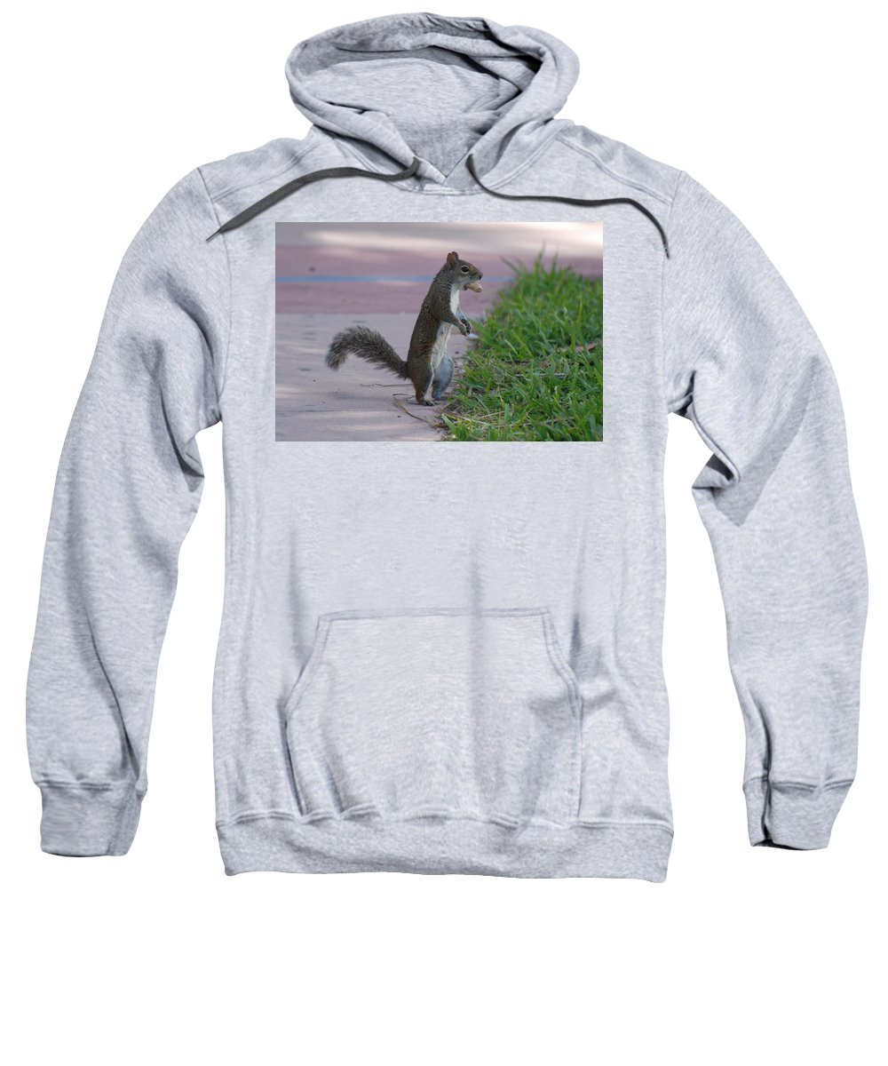 Squirrels Sweatshirt featuring the photograph Last Squirrel Standing by Rob Hans