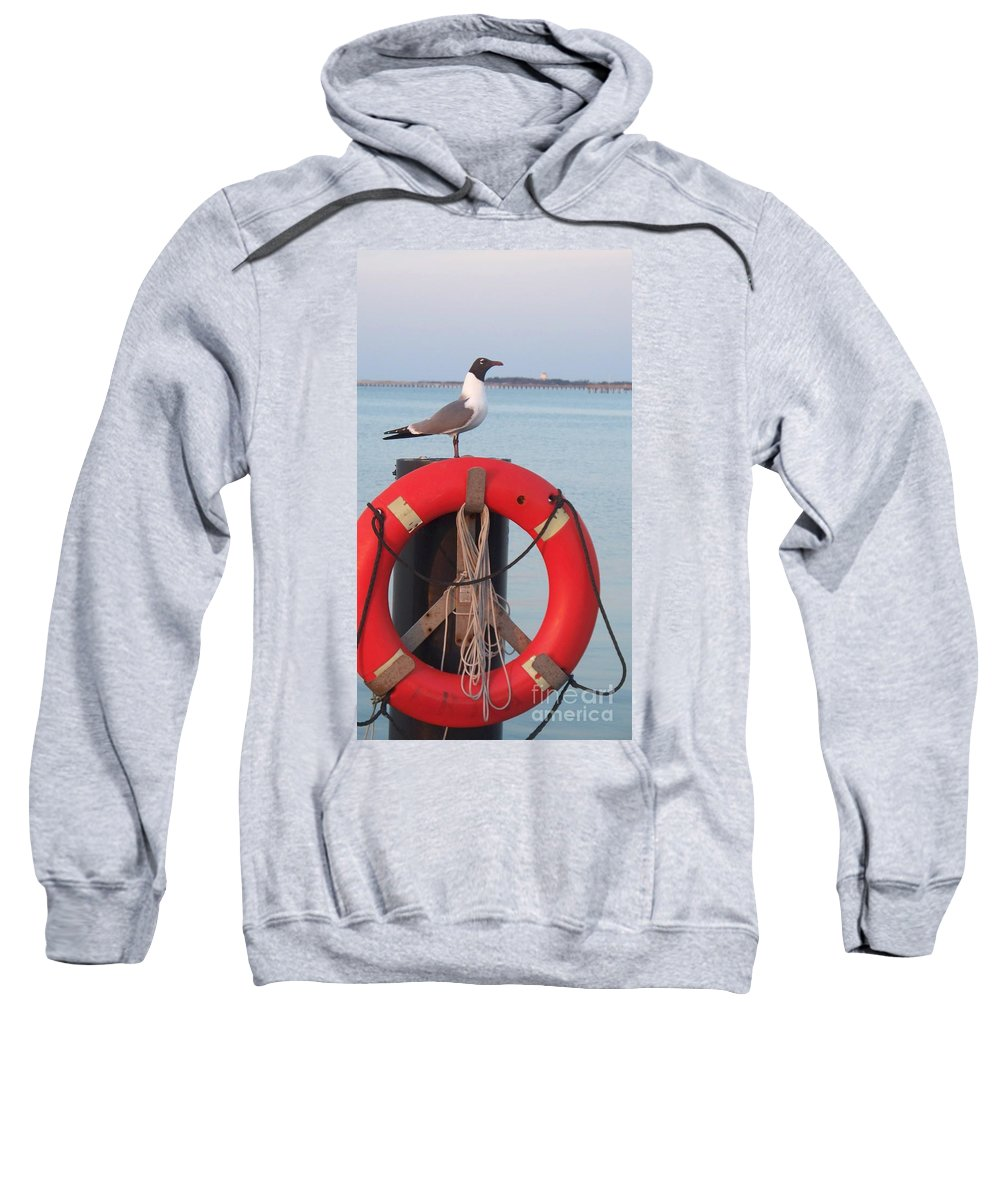 Gull Sweatshirt featuring the photograph Laughing Gull At Lewes by Eric Schiabor