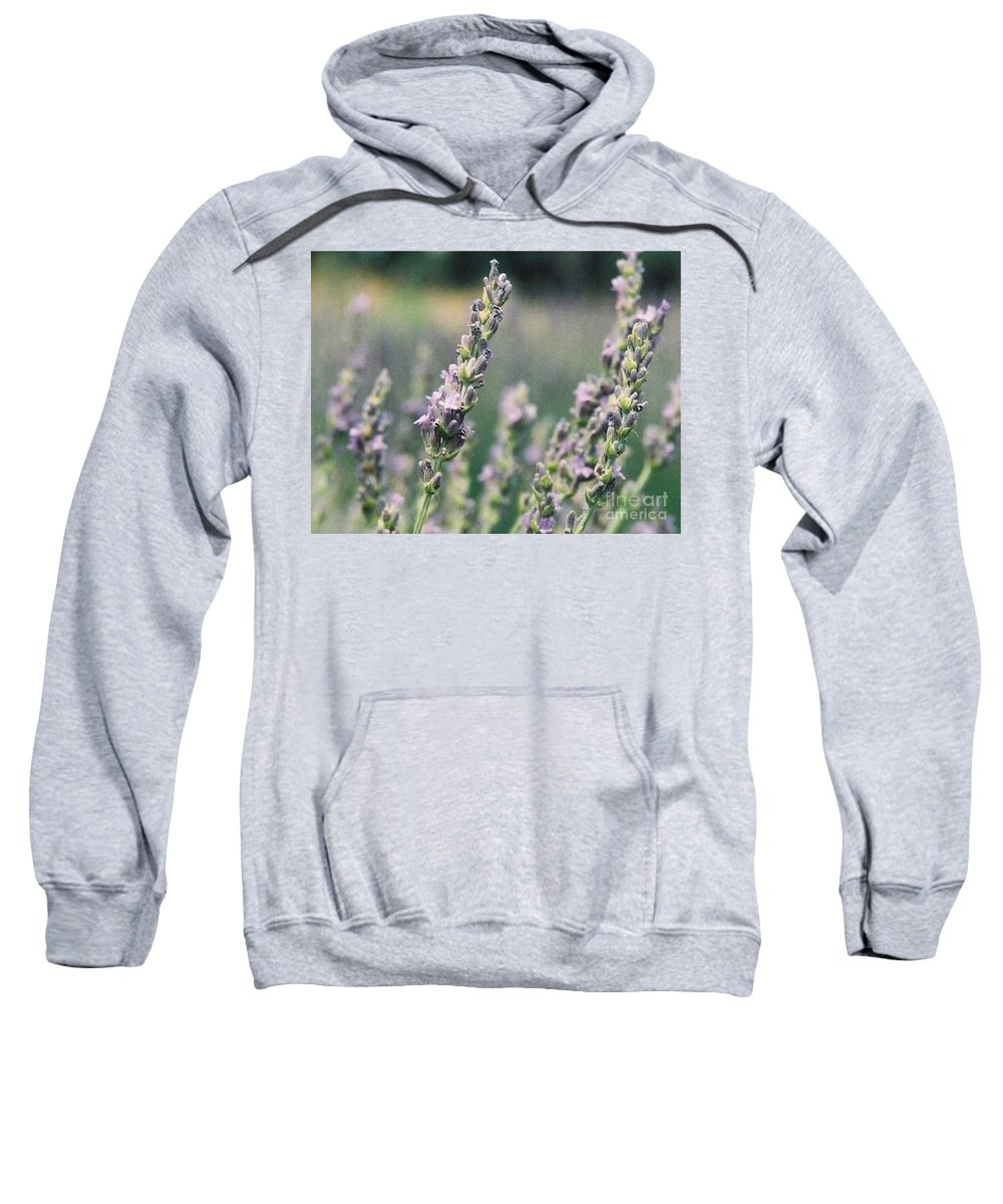 Flowers Sweatshirt featuring the painting Lavender by Eric Schiabor