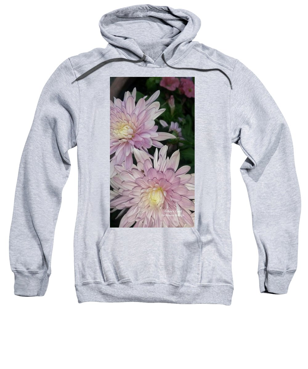 Mums Sweatshirt featuring the photograph Lavender Pompons by Maxine Billings