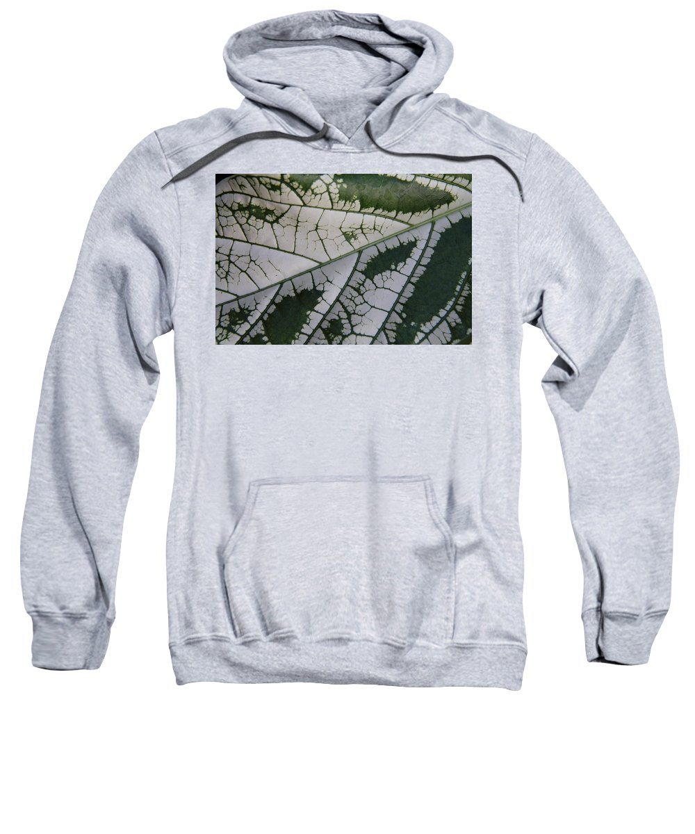 Tropical Leaf Sweatshirt featuring the photograph Leaf Variegated 1 by Jennifer Bright