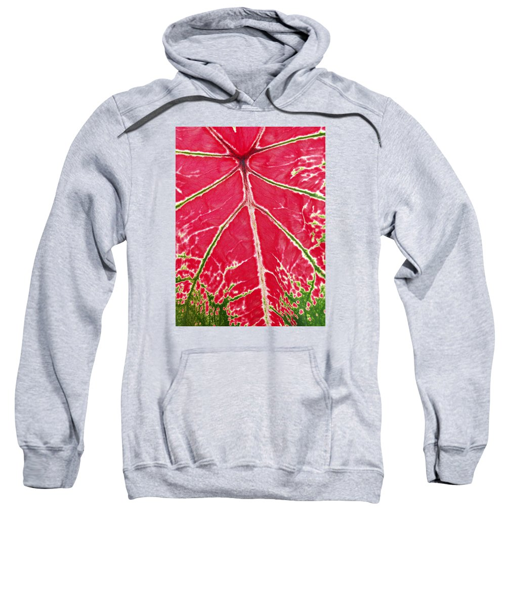 Leaf Sweatshirt featuring the photograph Leaf Veins by Bruce Roker