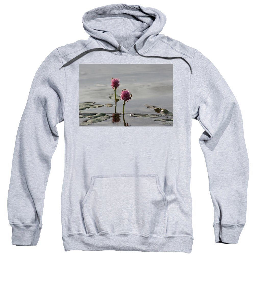 Wasp Lilypads Water Lake Plants Nature Wild Bugs Pink Flower Sweatshirt featuring the photograph Lilypads And Wasps by Andrea Lawrence