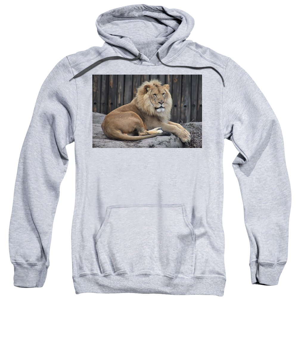 Lion Sweatshirt featuring the photograph Lion 2 by Flo McKinley