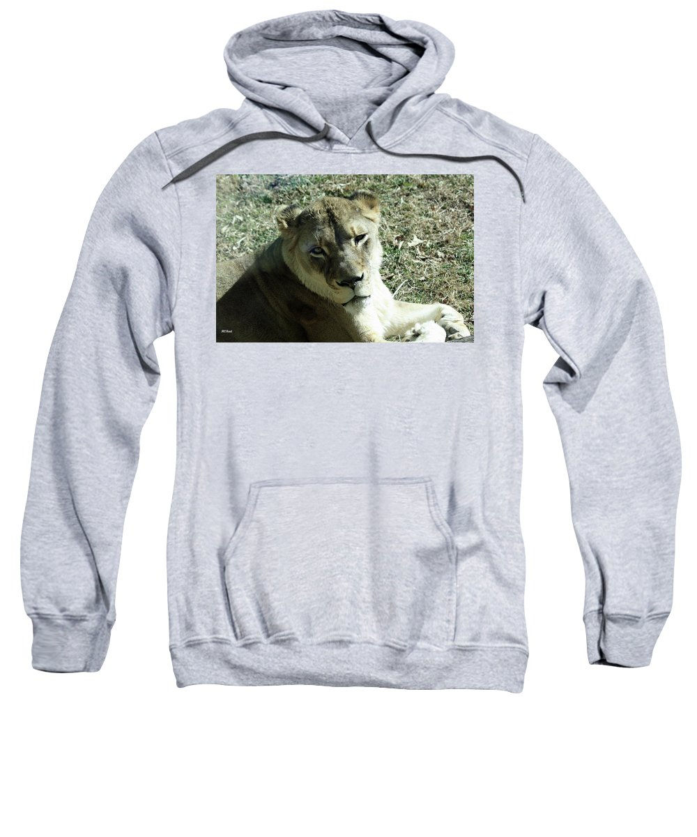 Maryland Sweatshirt featuring the photograph Lioness Peering by Ronald Reid