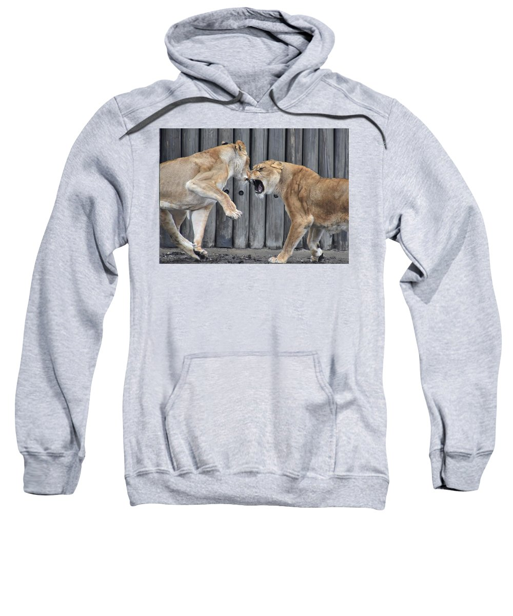Lion Sweatshirt featuring the photograph Lioness's Playing 1 by Flo McKinley