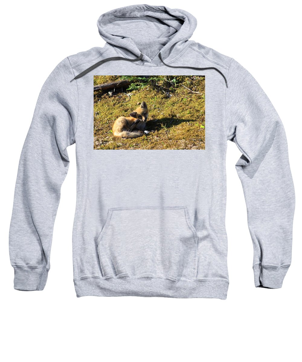 Fox Kit Sweatshirt featuring the photograph Little Poser by Joi Electa