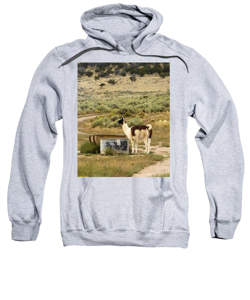 Llama Sweatshirt featuring the photograph Llama Land by Mary Rogers