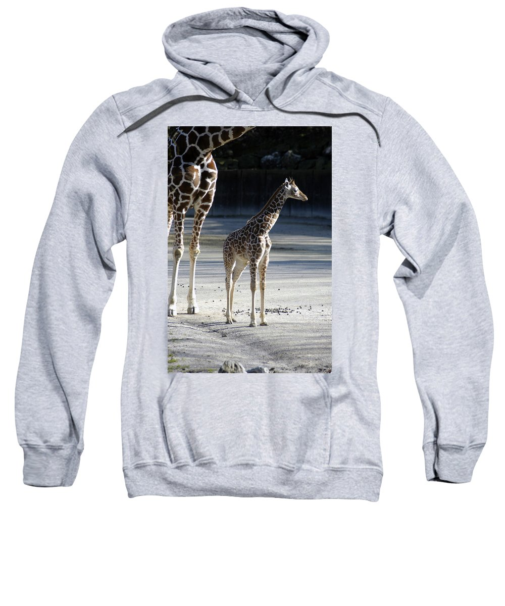 Long Legs Sweatshirt featuring the photograph Long Legs - Giraffe by D'Arcy Evans