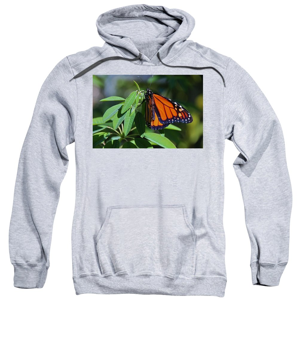 Monarch Sweatshirt featuring the photograph Long-since Retired by Michiale Schneider