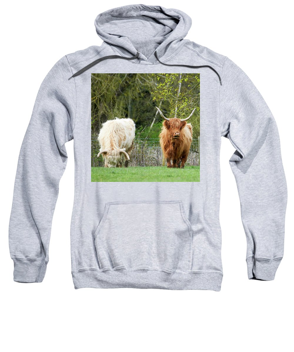Cattle Sweatshirt featuring the photograph Longhorn by Kevin Gedny