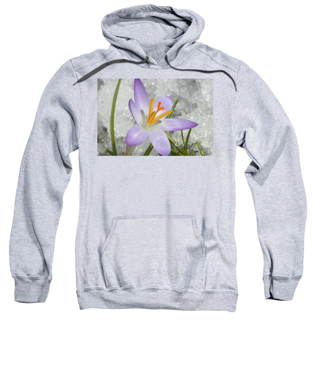 Photography Sweatshirt featuring the digital art Look To The Sun by Barbara S Nickerson