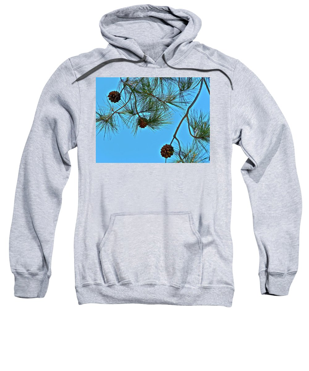 Trees Sweatshirt featuring the photograph Look Up by Diana Hatcher