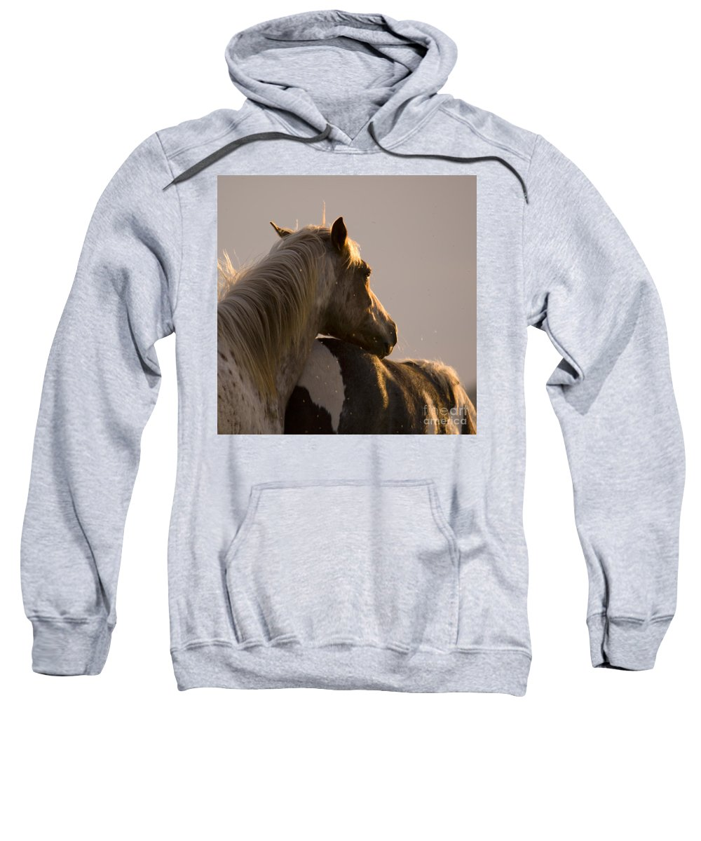 Horse Sweatshirt featuring the photograph Looking At The Sunset by Angel Ciesniarska