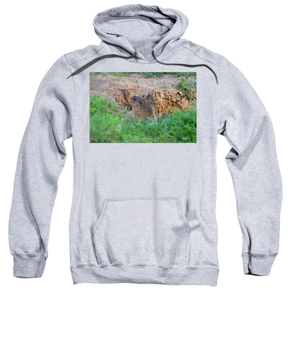 Groundhog Sweatshirt featuring the photograph Looking For Intruders by Belinda Stucki
