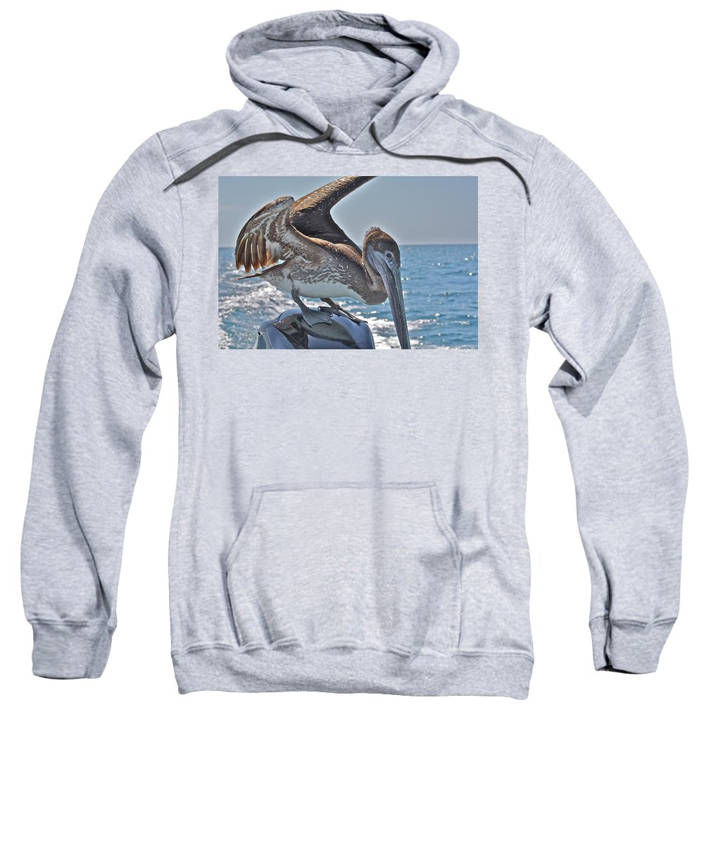 Pelican Sweatshirt featuring the photograph Looking For Leftovers by Diana Hatcher