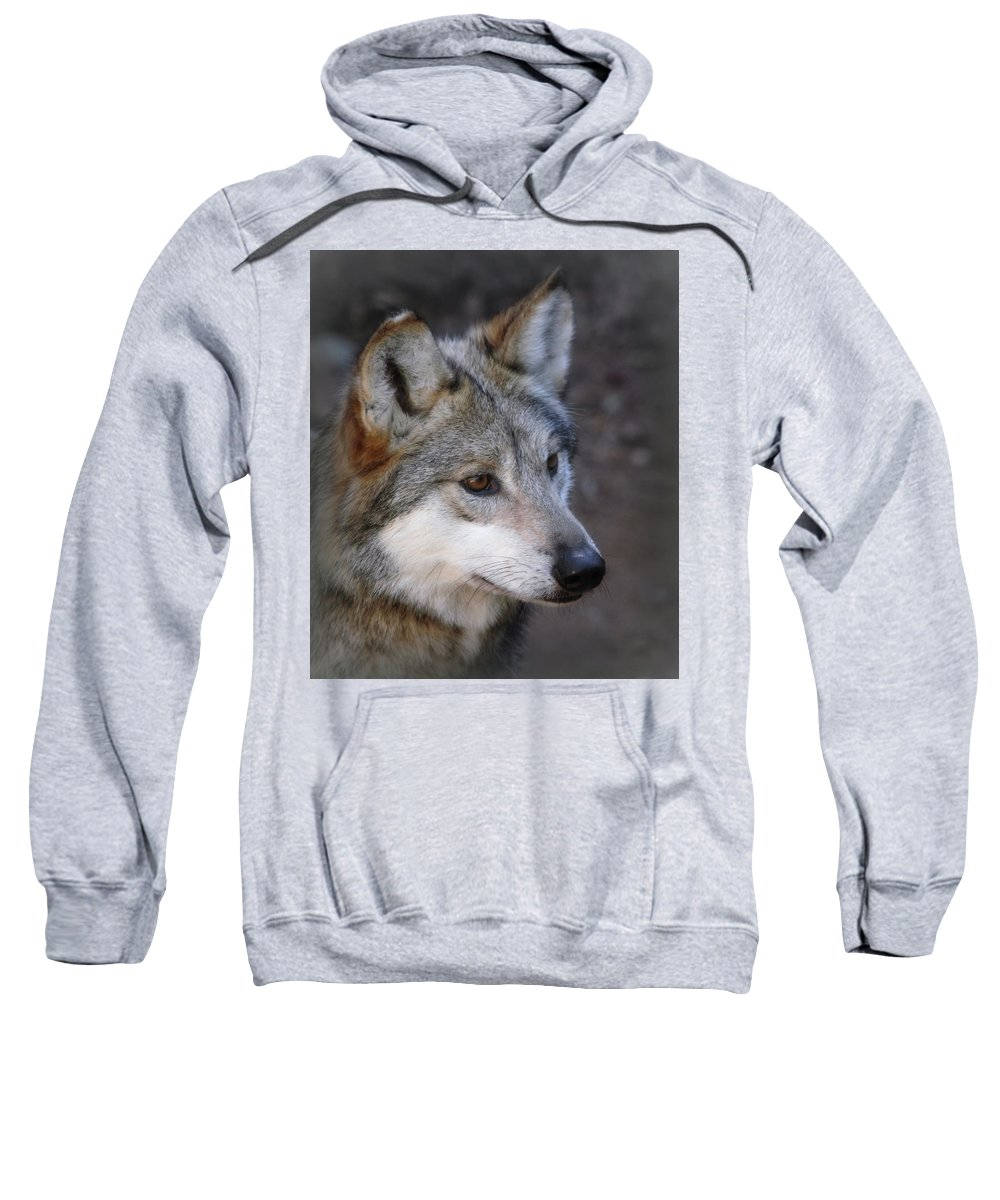 Wolf Sweatshirt featuring the photograph Looking Onward by Elaine Malott