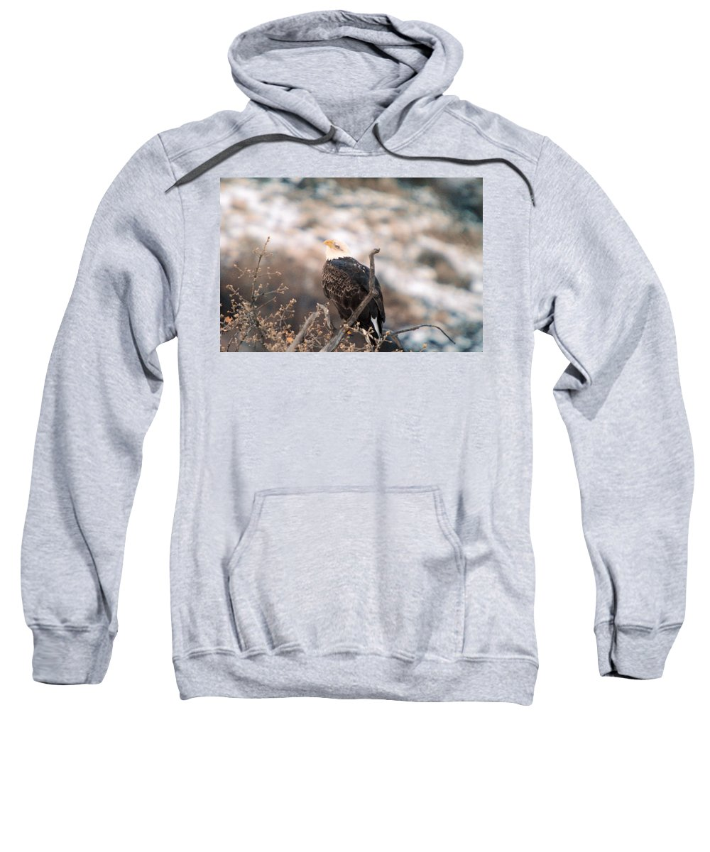 Eagles Sweatshirt featuring the photograph Looking Up by Jeff Swan