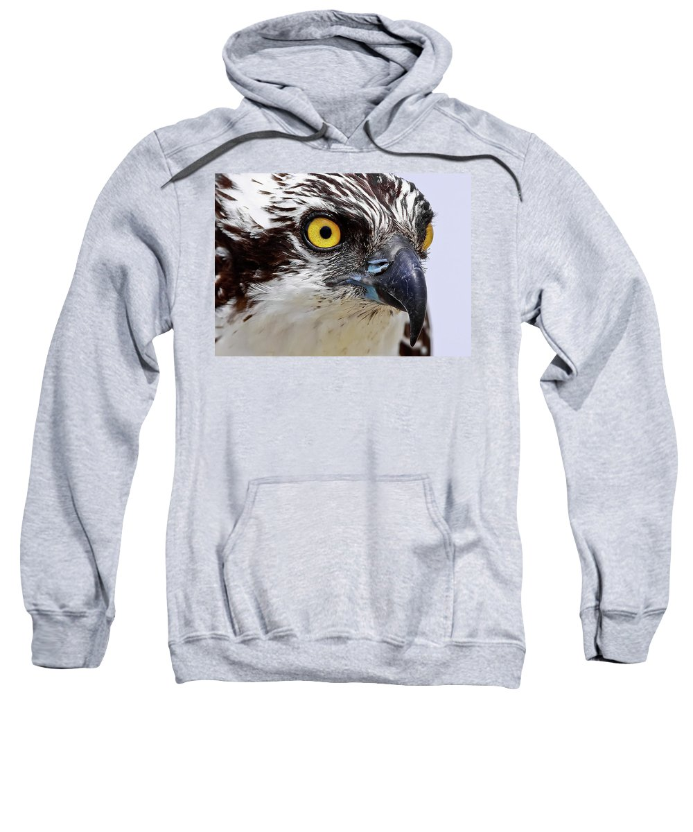 Osprey Sweatshirt featuring the photograph Looks That Kill by Dennis Goodman