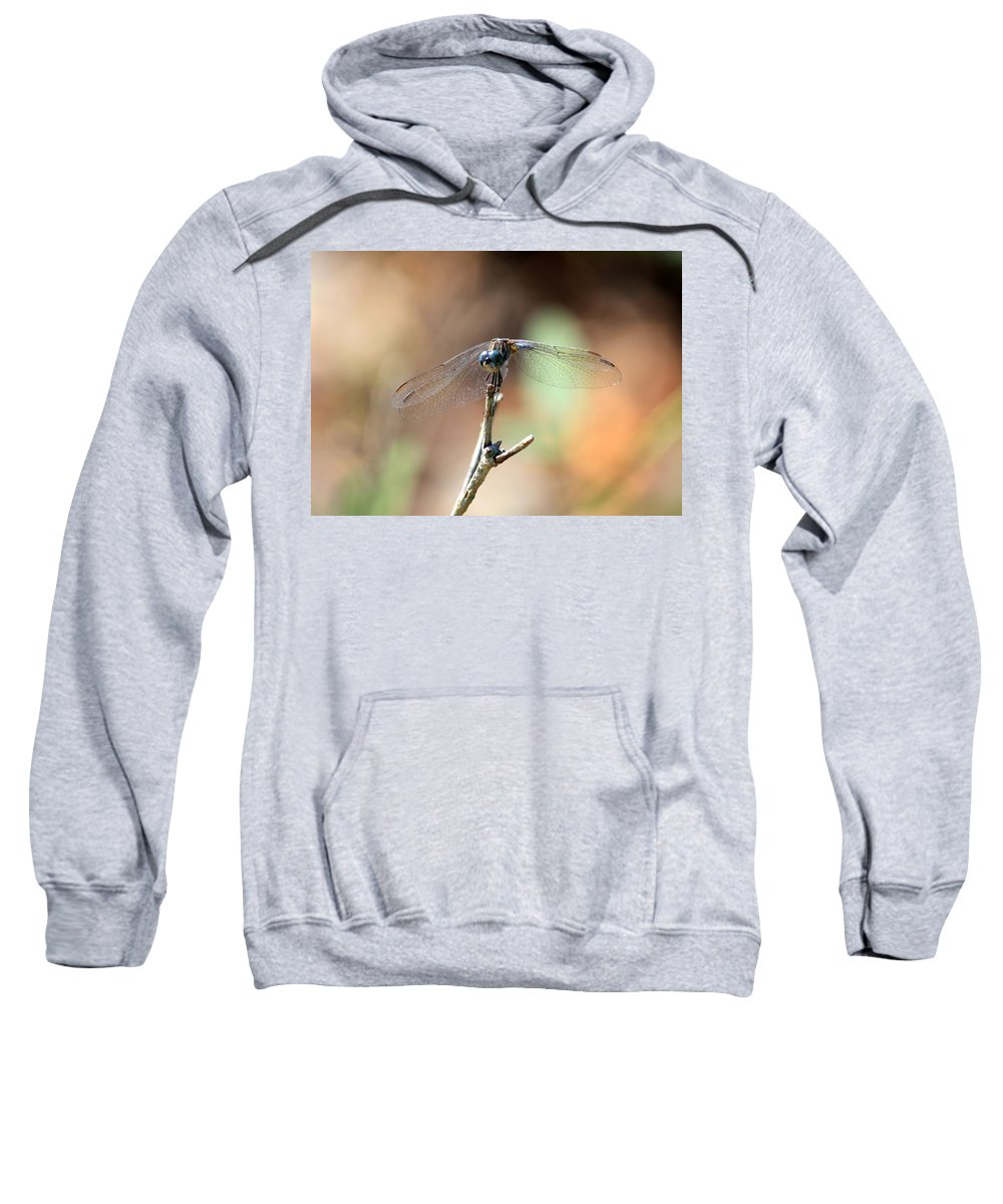 Dragonfly Sweatshirt featuring the photograph Lovely Dragonfly by Carol Groenen