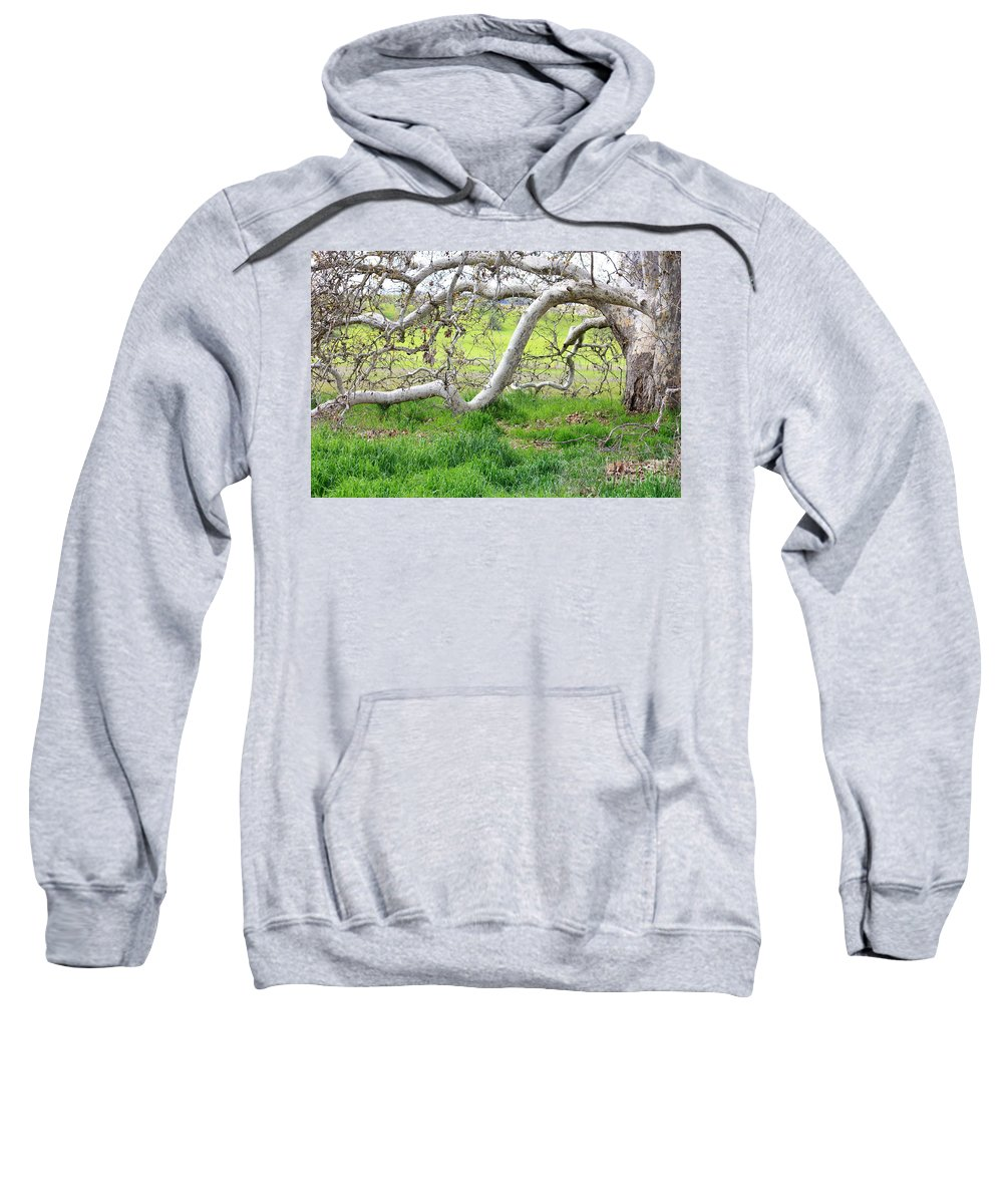 Landscape Sweatshirt featuring the photograph Low Branches On Sycamore Tree by Carol Groenen