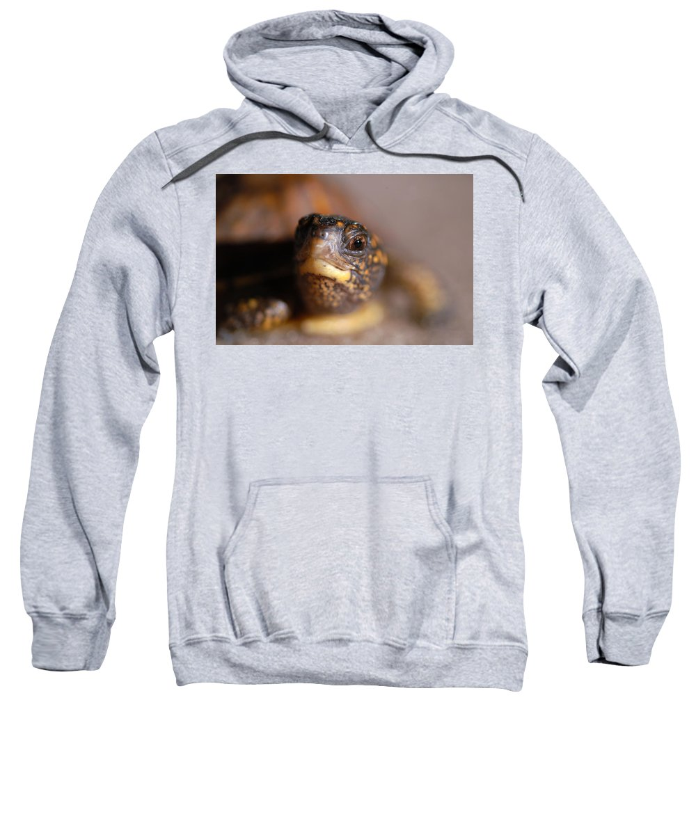 Clay Sweatshirt featuring the photograph Lucky by Clayton Bruster