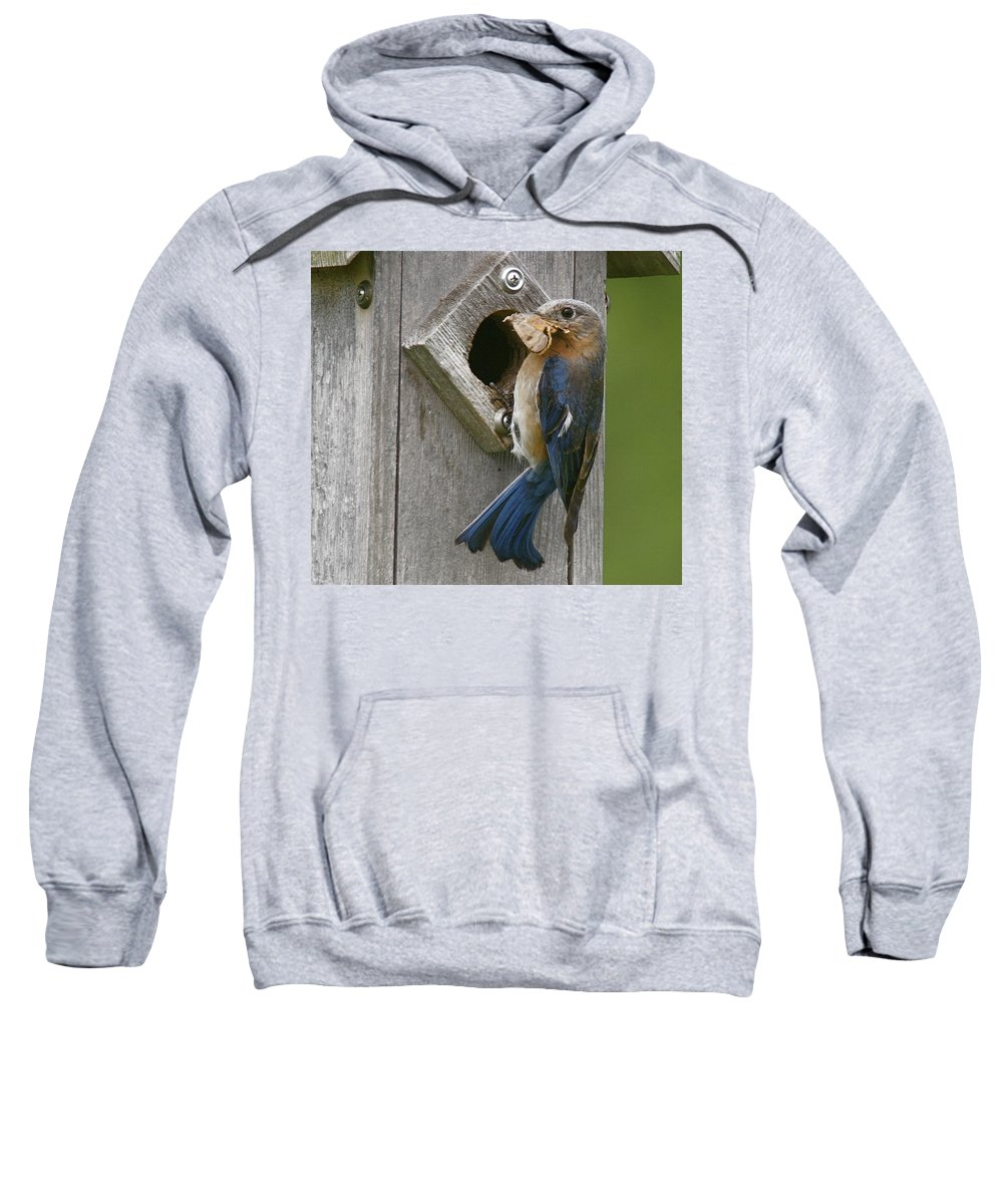 Bird Sweatshirt featuring the photograph Lunch Time by Robert Pearson