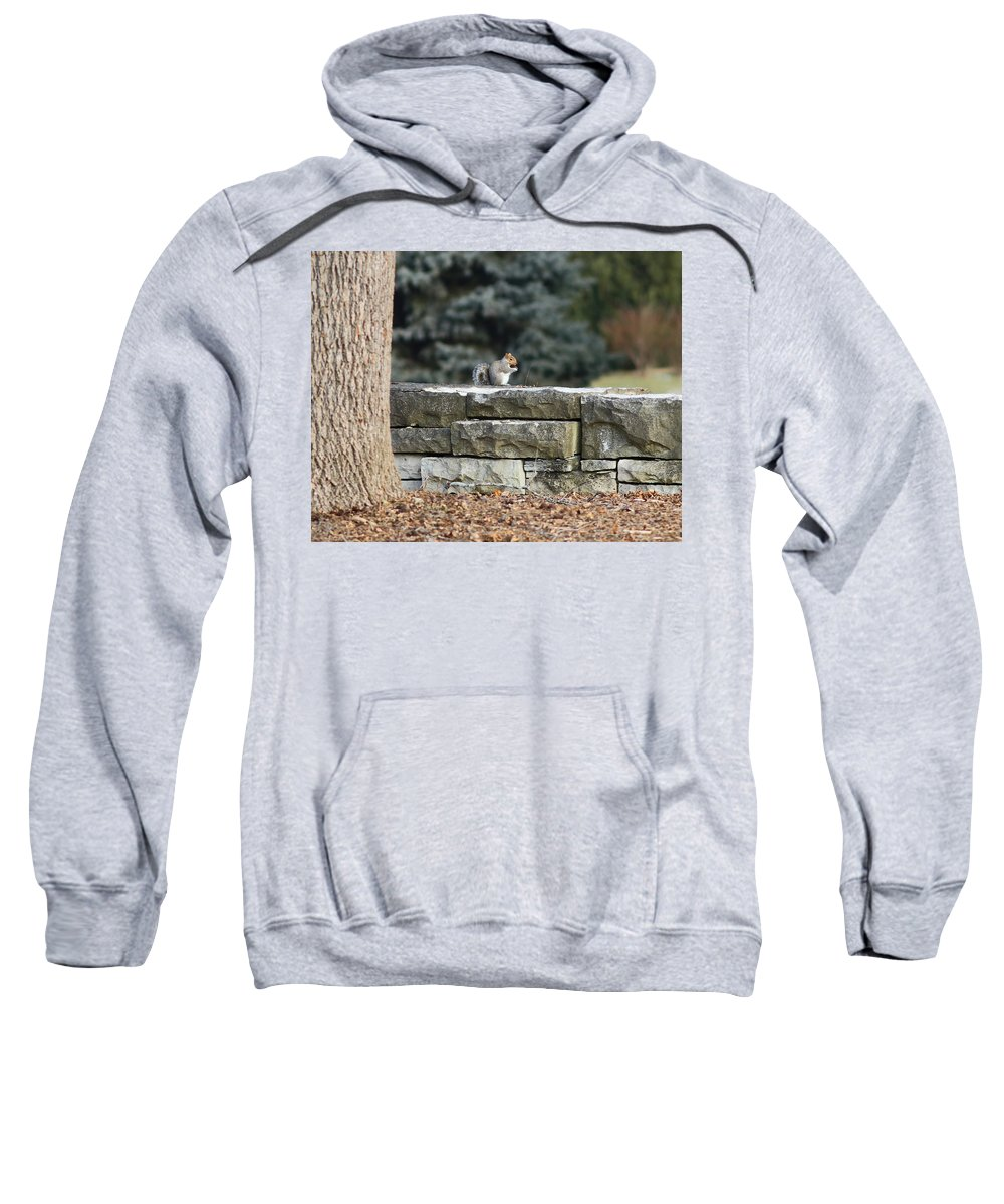 Squirrel Sweatshirt featuring the photograph Lunch Time by Steve Bell