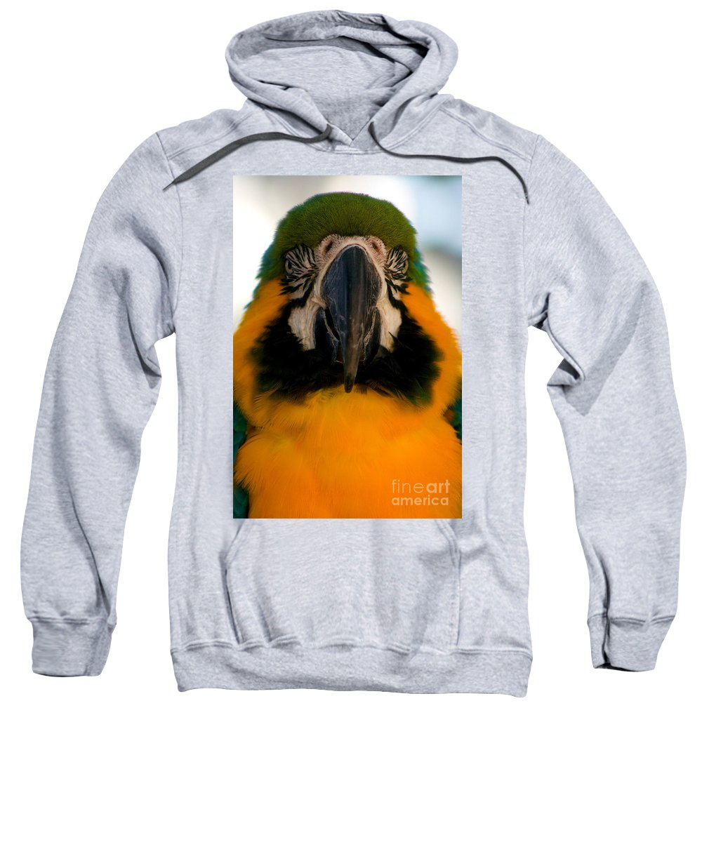 Macaw Sweatshirt featuring the photograph Macaw IIi by Thomas Marchessault