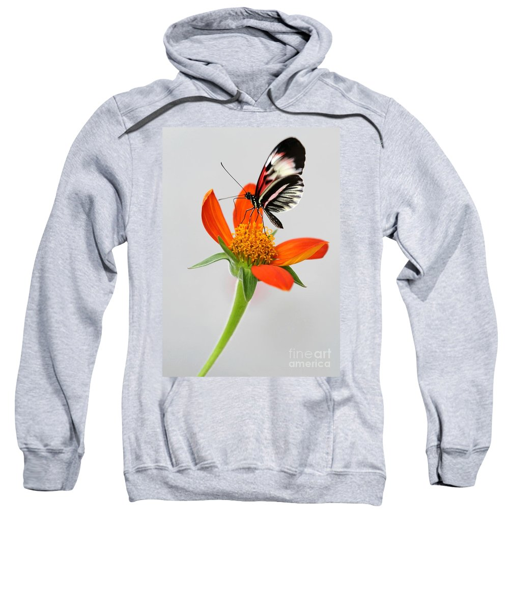 Piano Key Sweatshirt featuring the photograph Magical Butterfly by Sabrina L Ryan