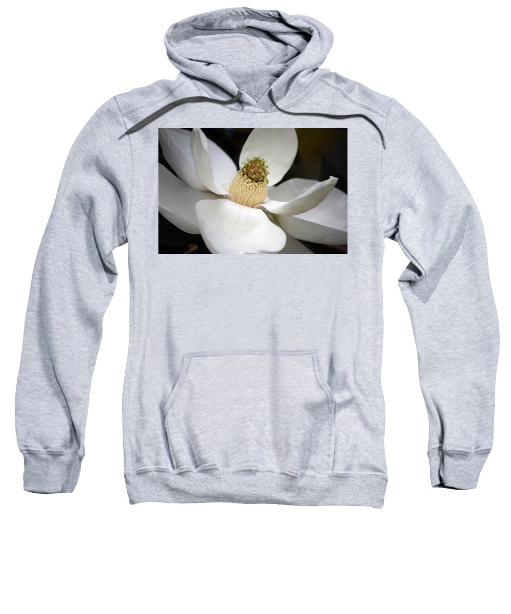 Flowers Sweatshirt featuring the photograph Magnolia 2 by Robert Meanor